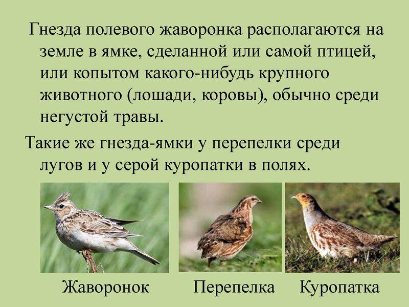 den-ptic_00009