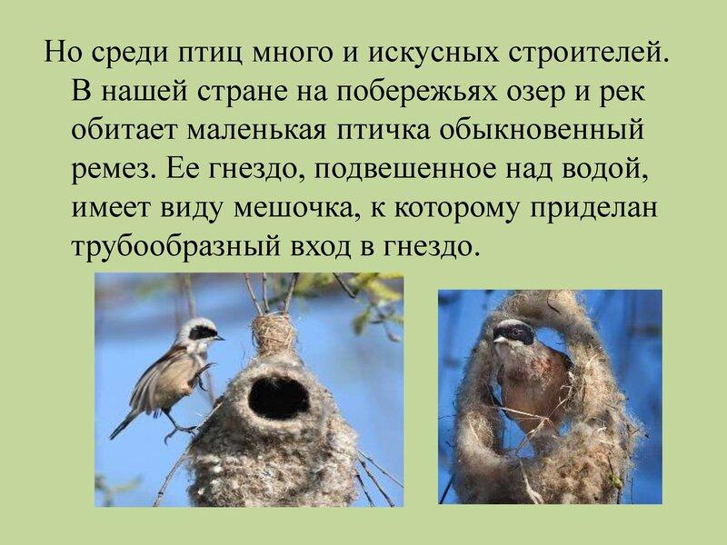 den-ptic_00010