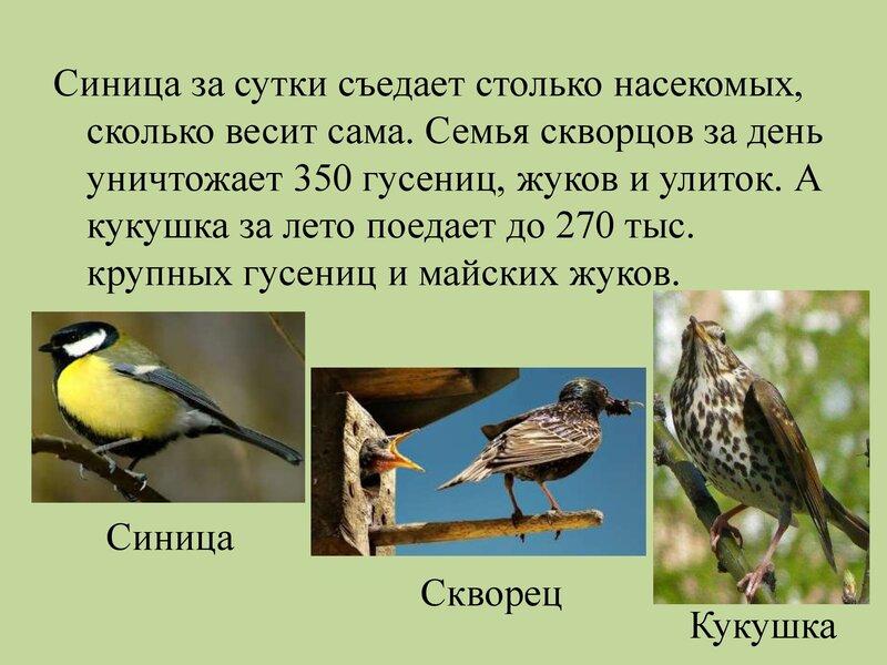 den-ptic_00014