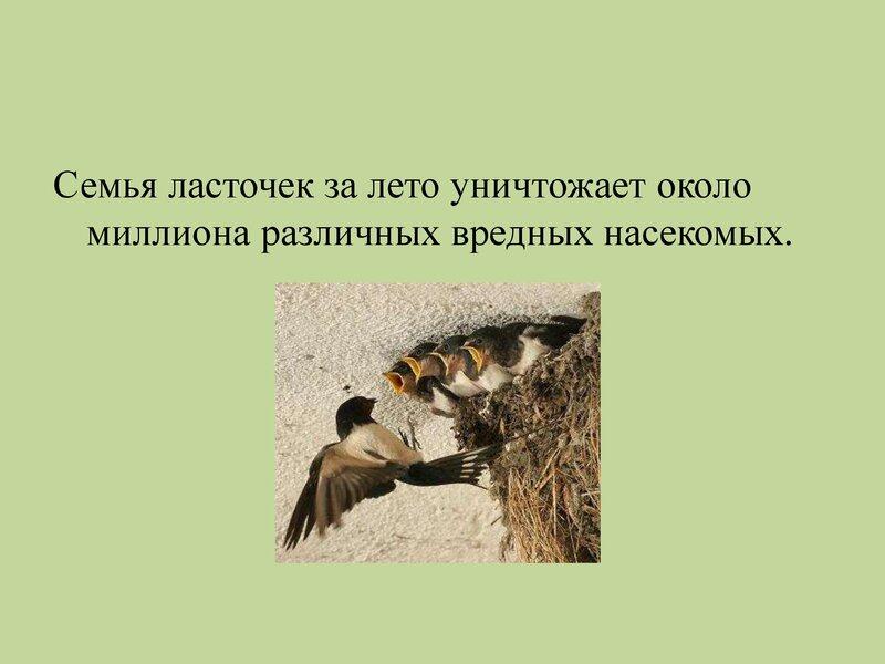 den-ptic_00016