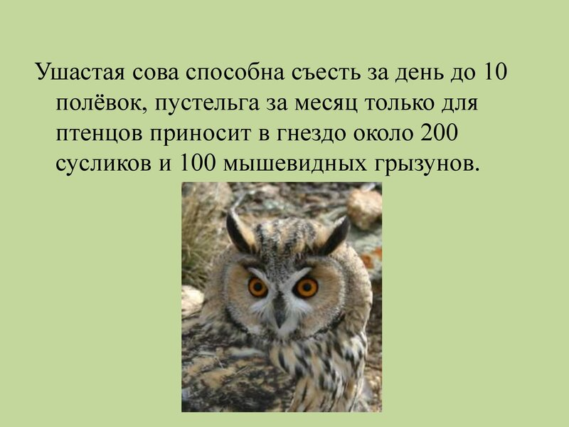 den-ptic_00017