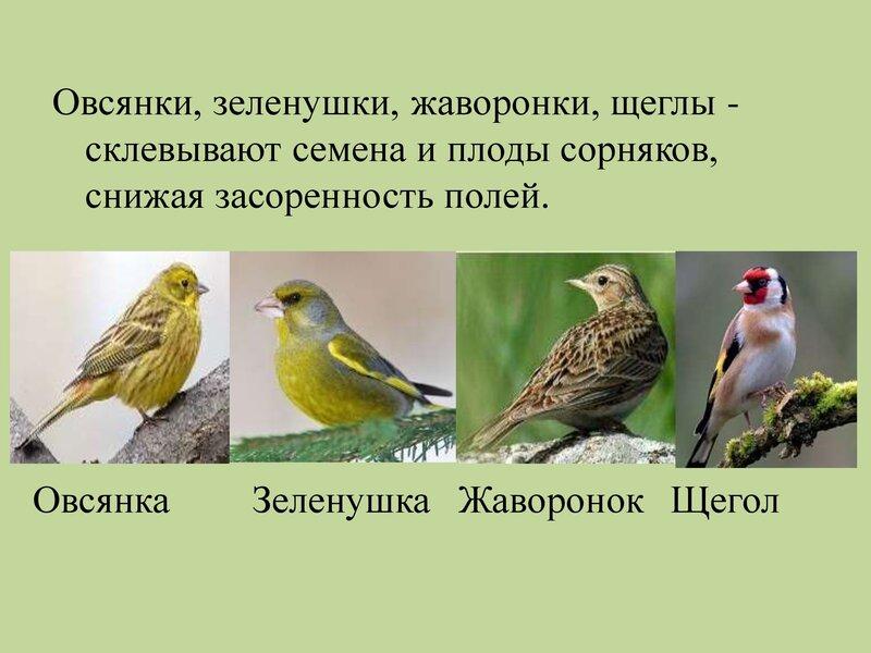 den-ptic_00018