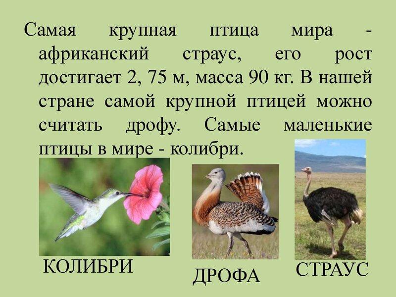 den-ptic_00019