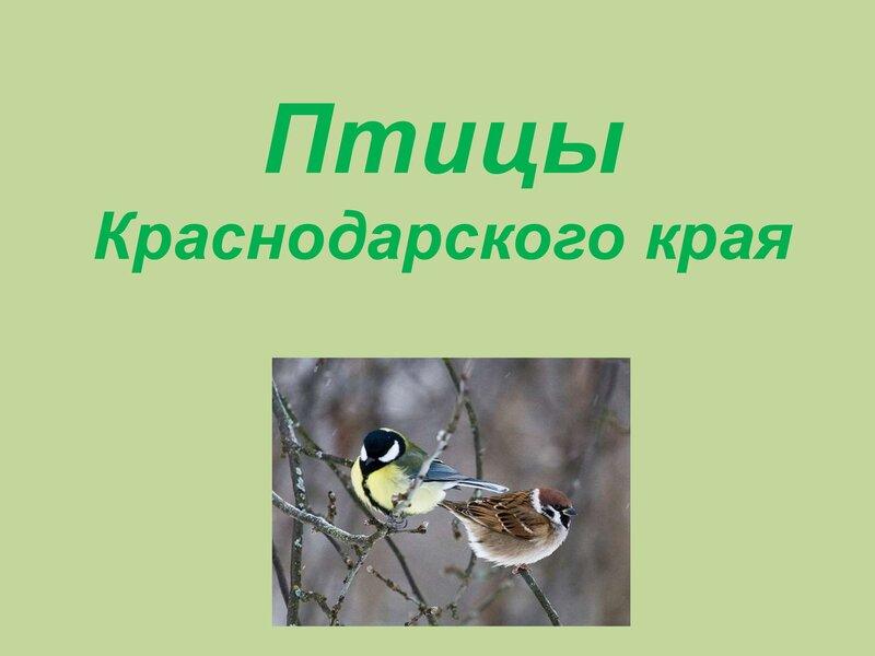 den-ptic_00022