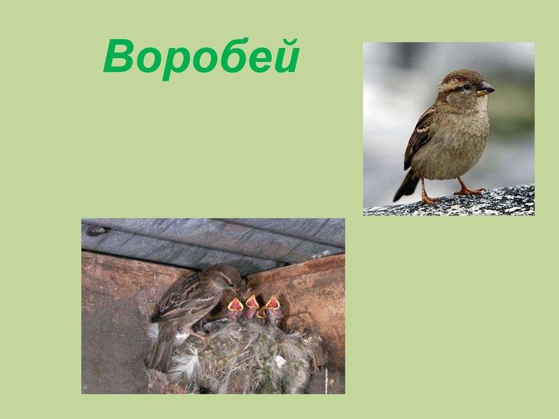 den-ptic_00023