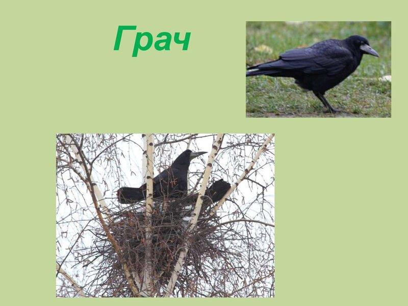 den-ptic_00028
