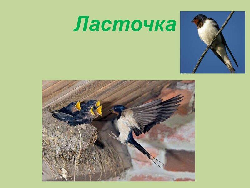 den-ptic_00029