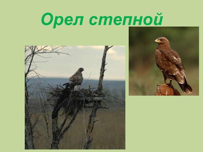 den-ptic_00034