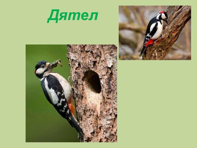 den-ptic_00036