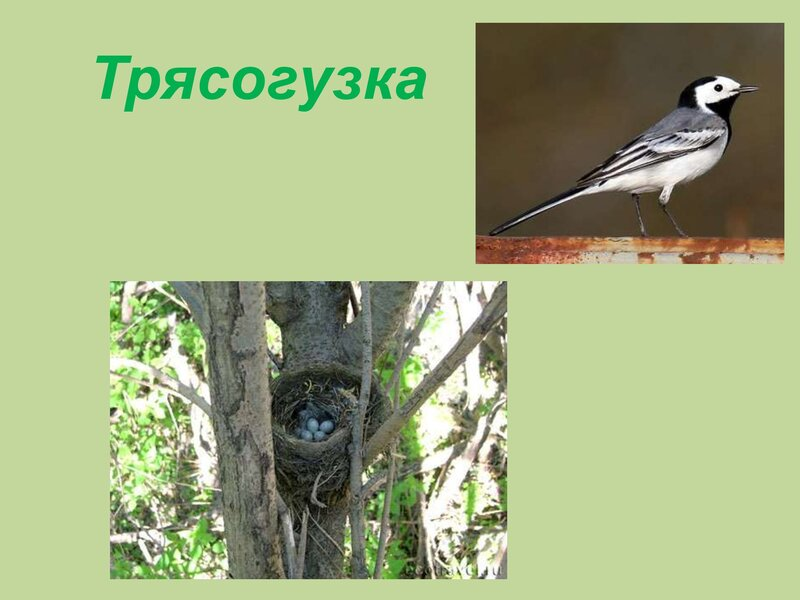 den-ptic_00037